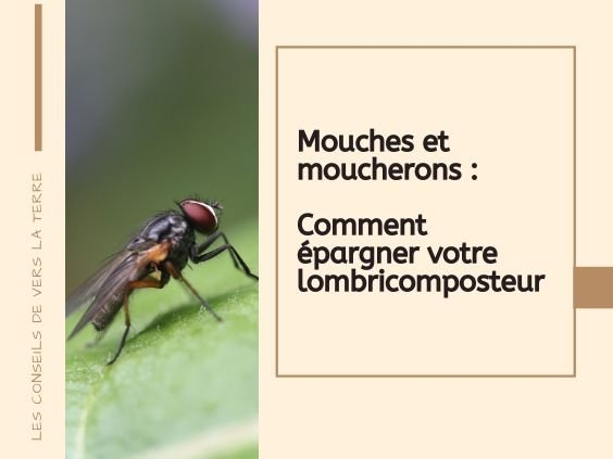 mouche lombricomposteur